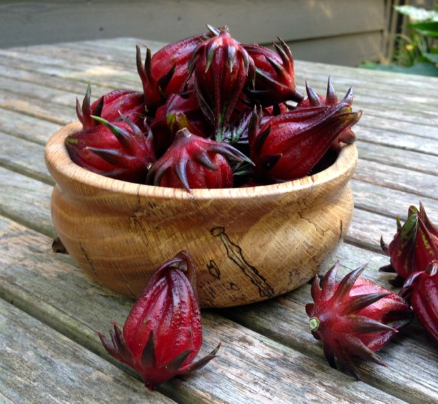 Freshly harvested roselle fruits, or calyces.