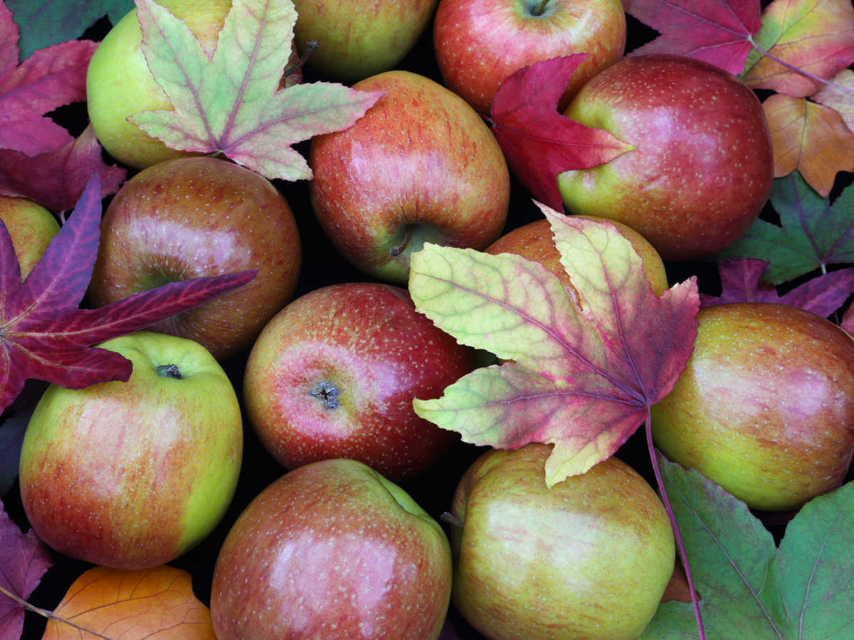 1609w-getty-apples-scattered-leaves.jpg