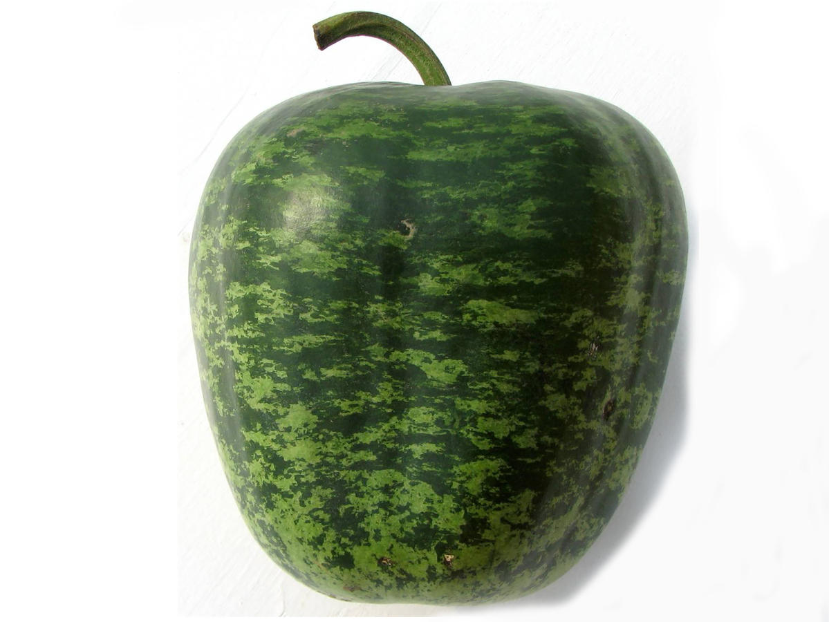 1710w-Apple-Gourd-Single.jpg