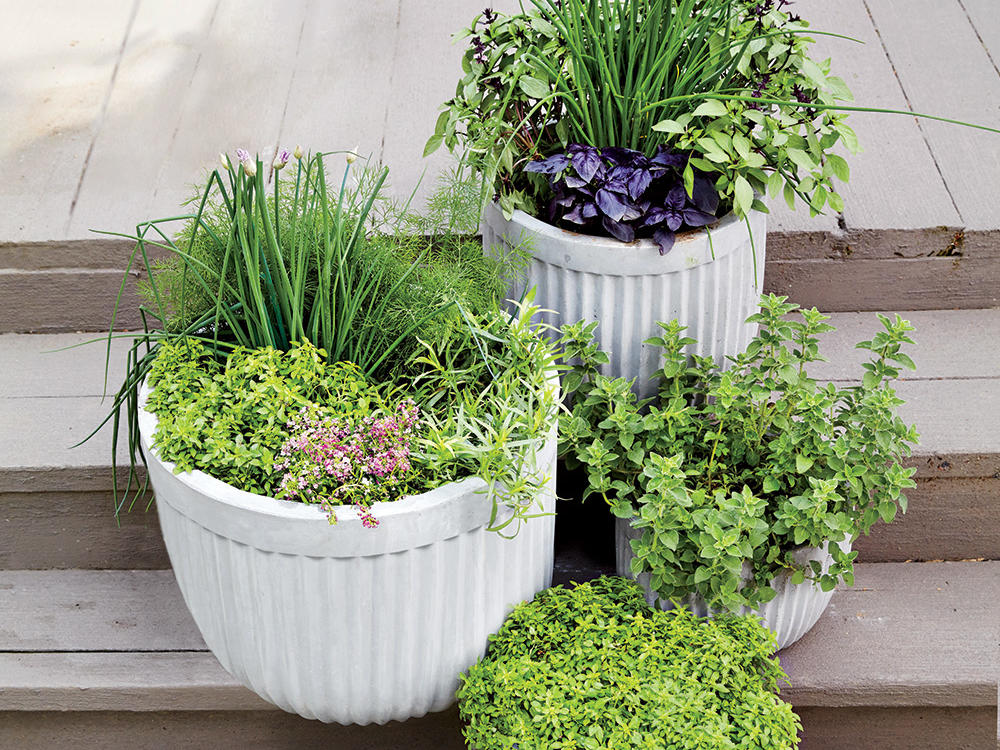 1506p107-potted-herbs.jpg