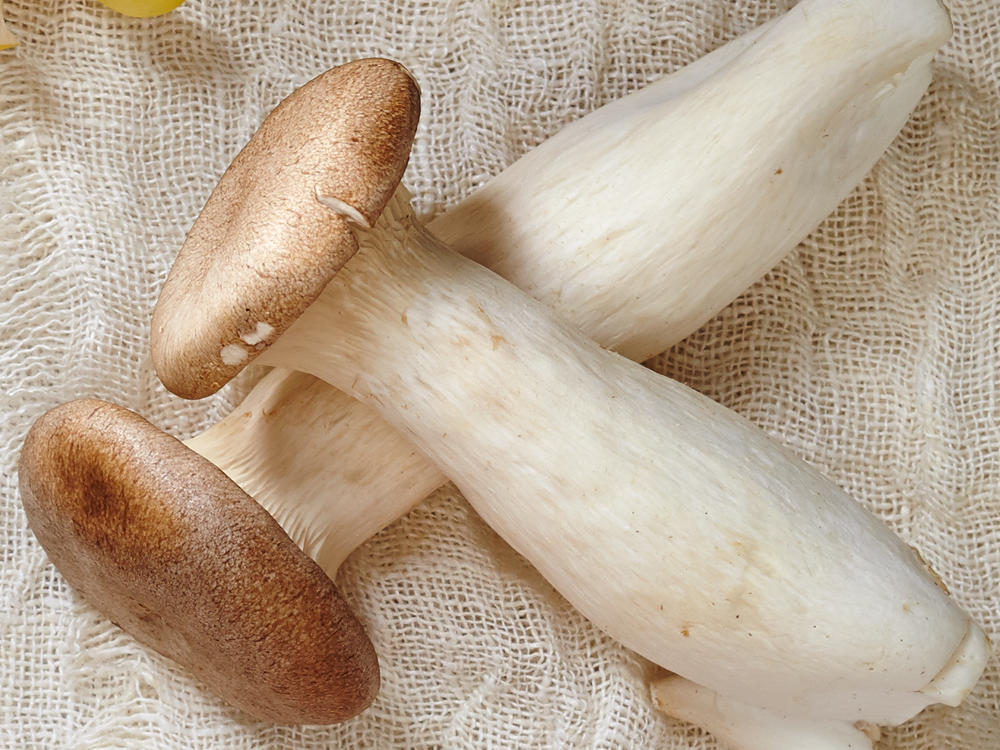 king trumpet mushrooms