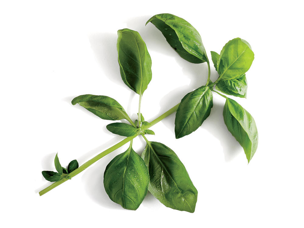 How to Store Basil for Freshness