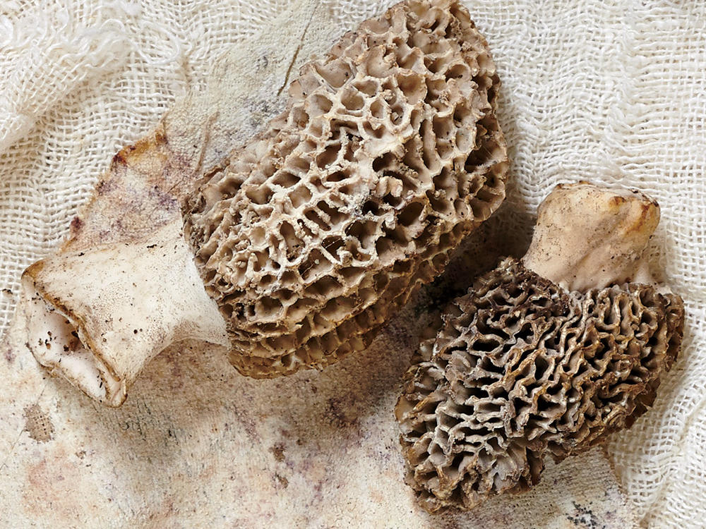 1003 Morel Mushrooms