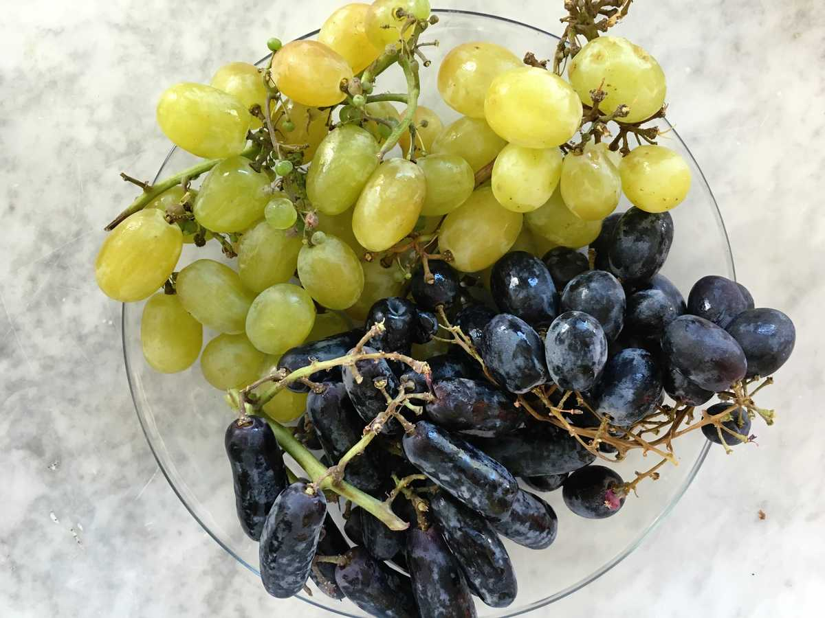 grape varieties image