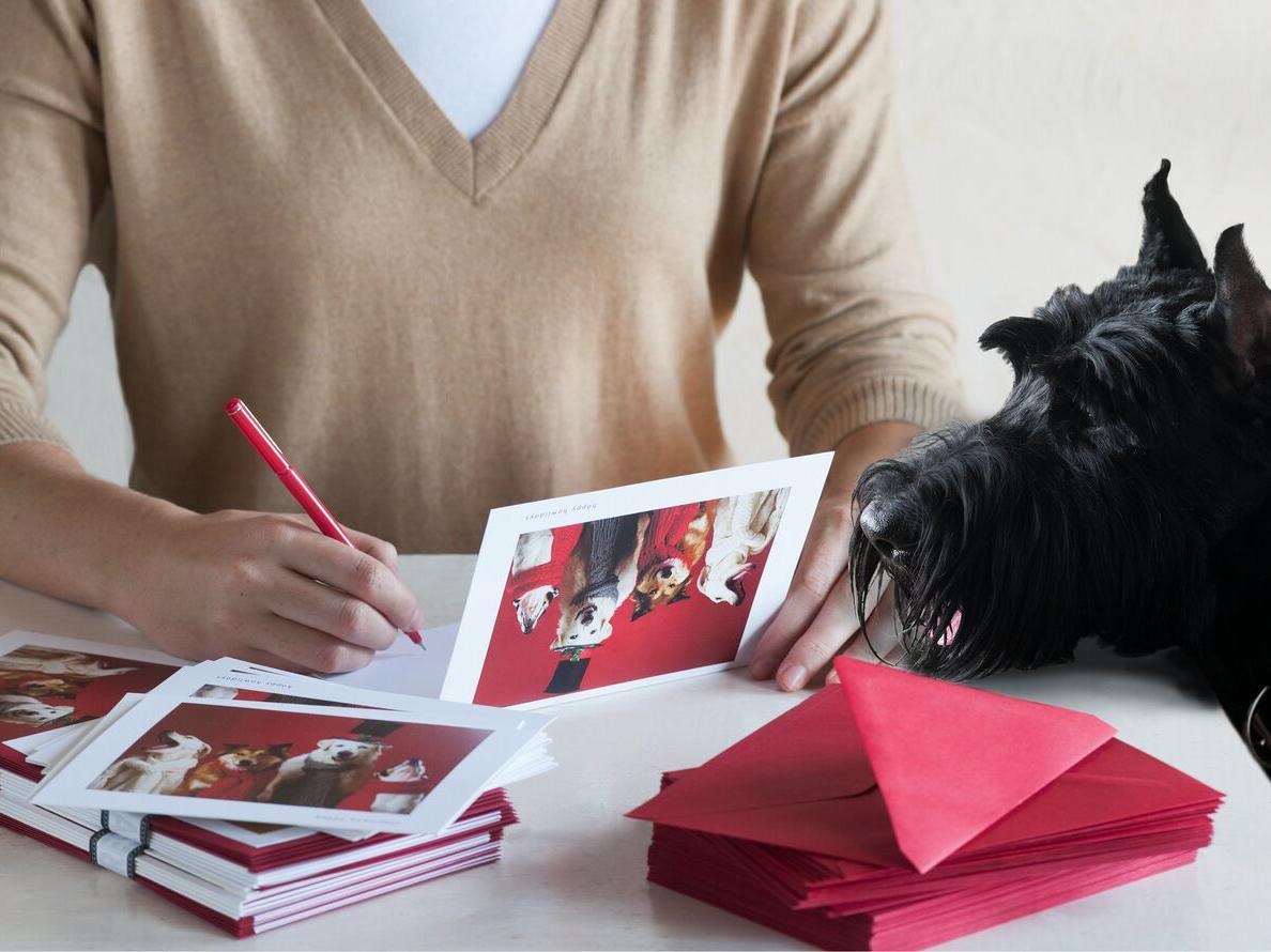 1708w Hooray for the Underdog Holiday Cards