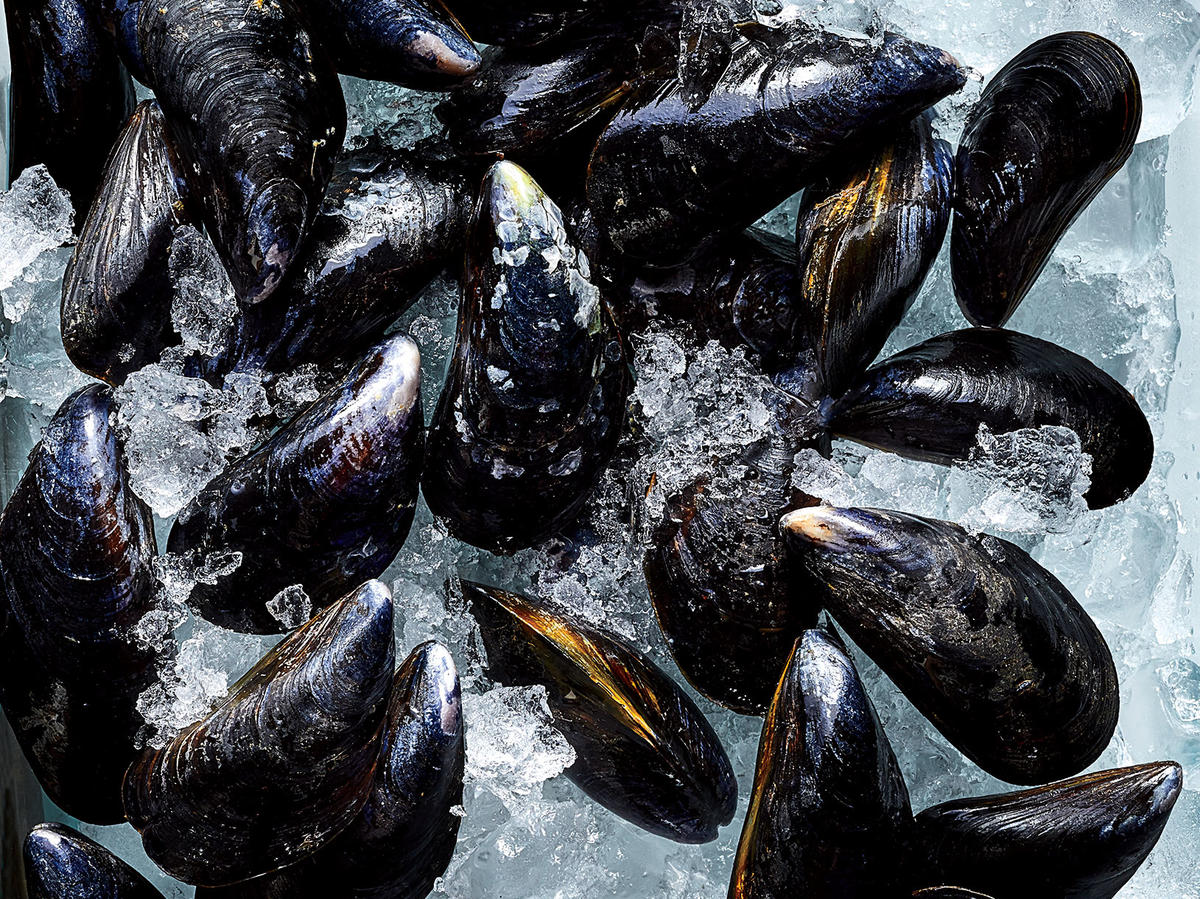 mussels on ice