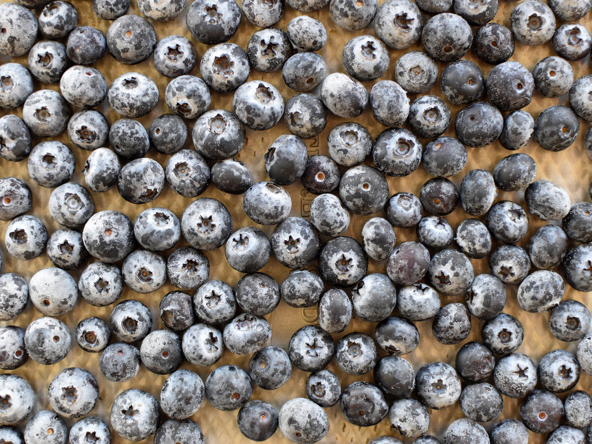 1903w How to Freeze Blueberries - What to Do
