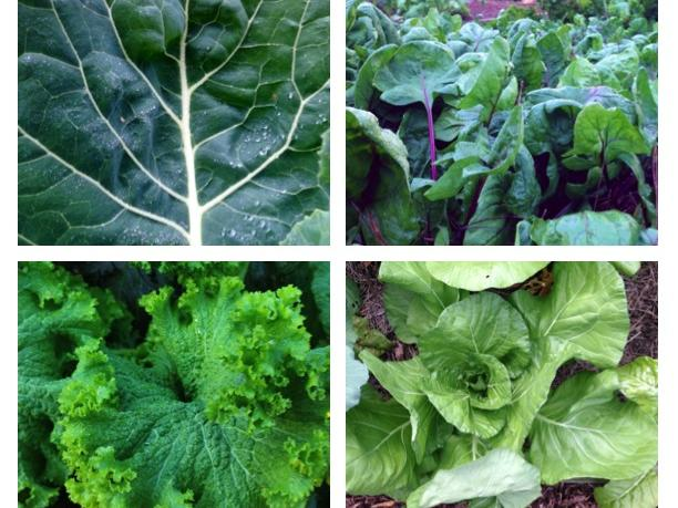grid-of-greens.jpg