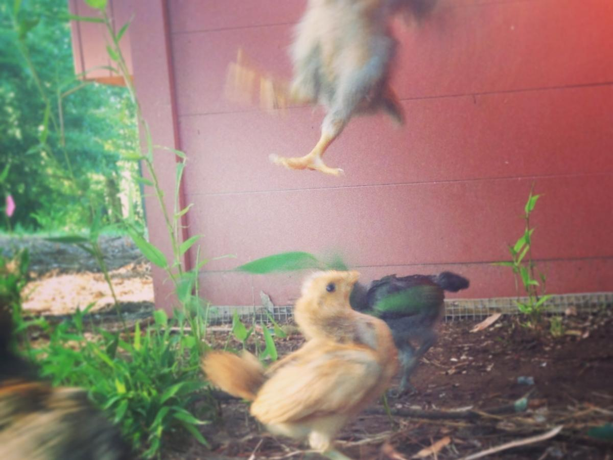 kung-fu-fighting-chicks-mbshaddix.jpg