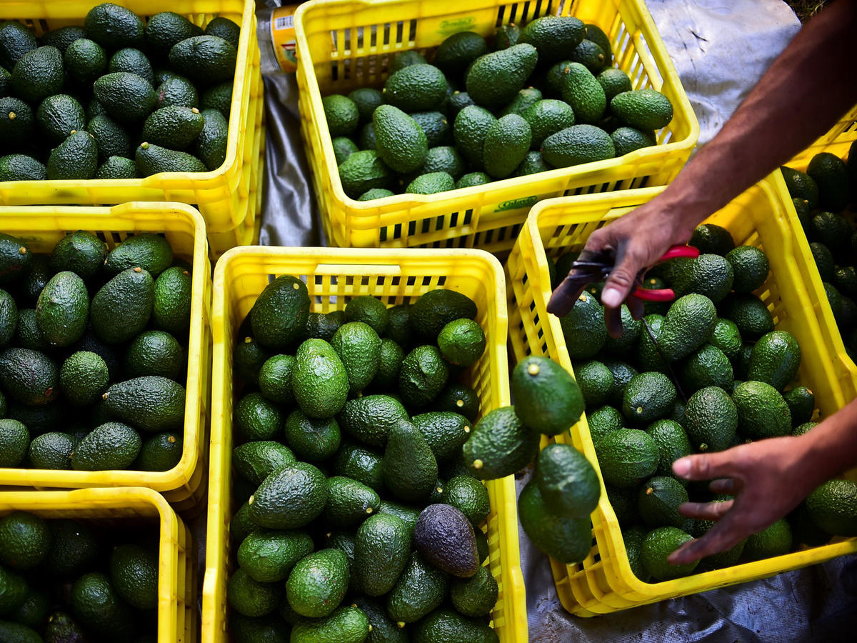 The U.S. Would Run Out of Avocados in Three Weeks If the Mexico Border Completely Closes