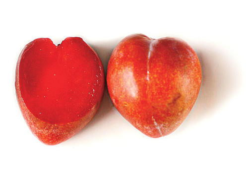 Elephant Heart Plum