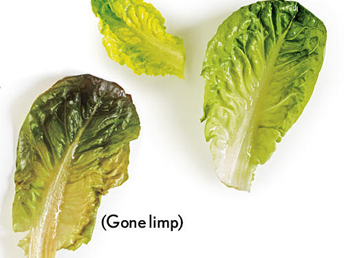 How to Avoid Lifeless Lettuce