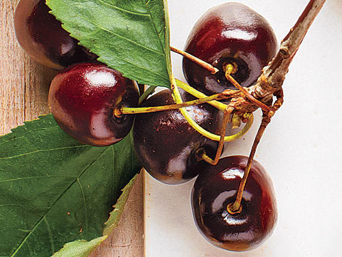 Dark Hudson Cherries