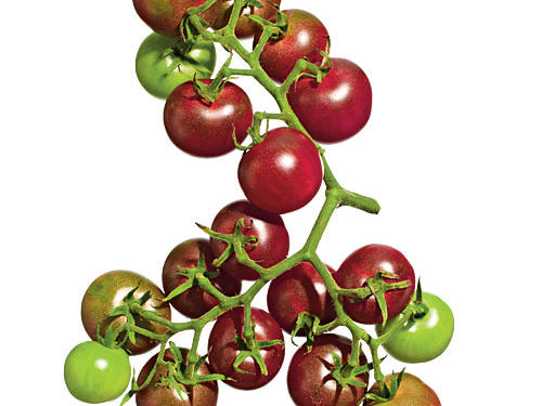 Chocolate Cherry Tomatoes