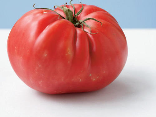 Mortgage Lifter tomato