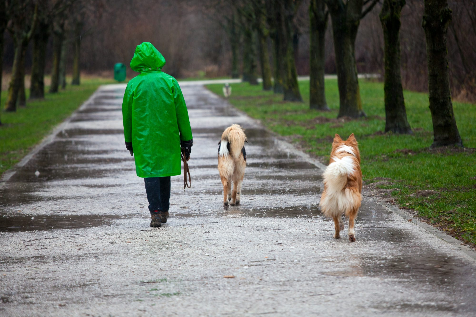 Dangers of Rain to Pets