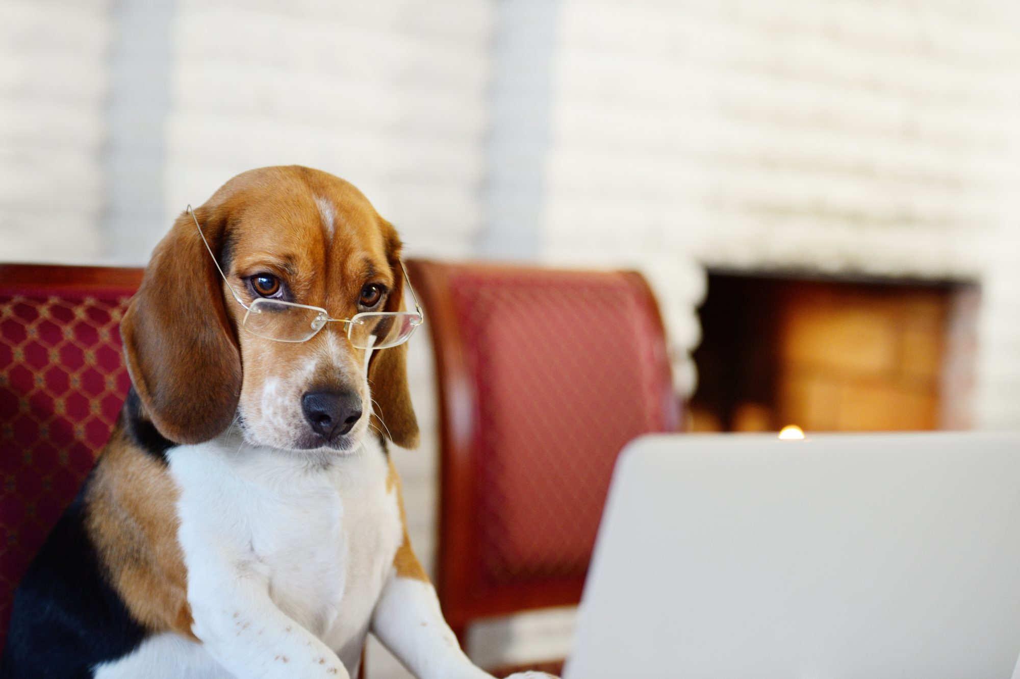 Dog Working from Home