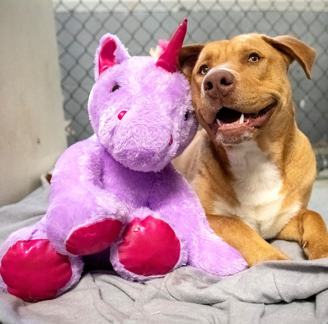 Stray Dog Stuffed Unicorn