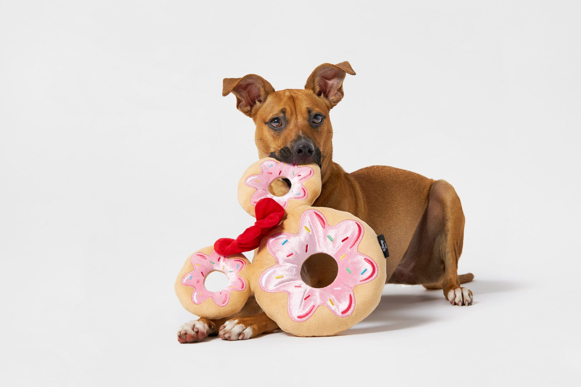 Disney Minnie Mouse Donut Plush Squeaky Dog Toy with dog