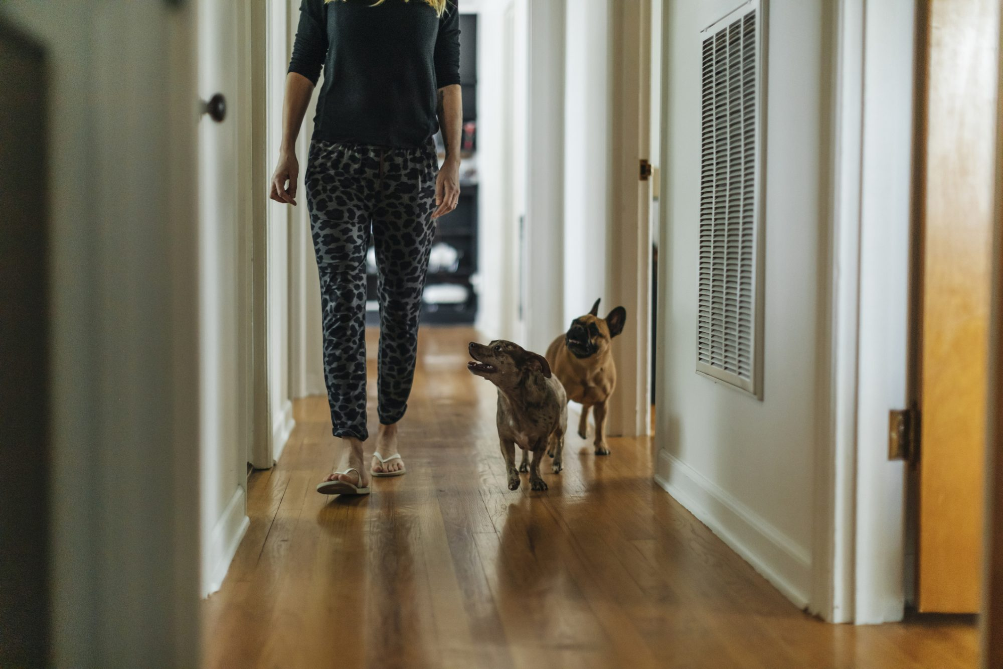 Woman and dogs walking in hallway at home