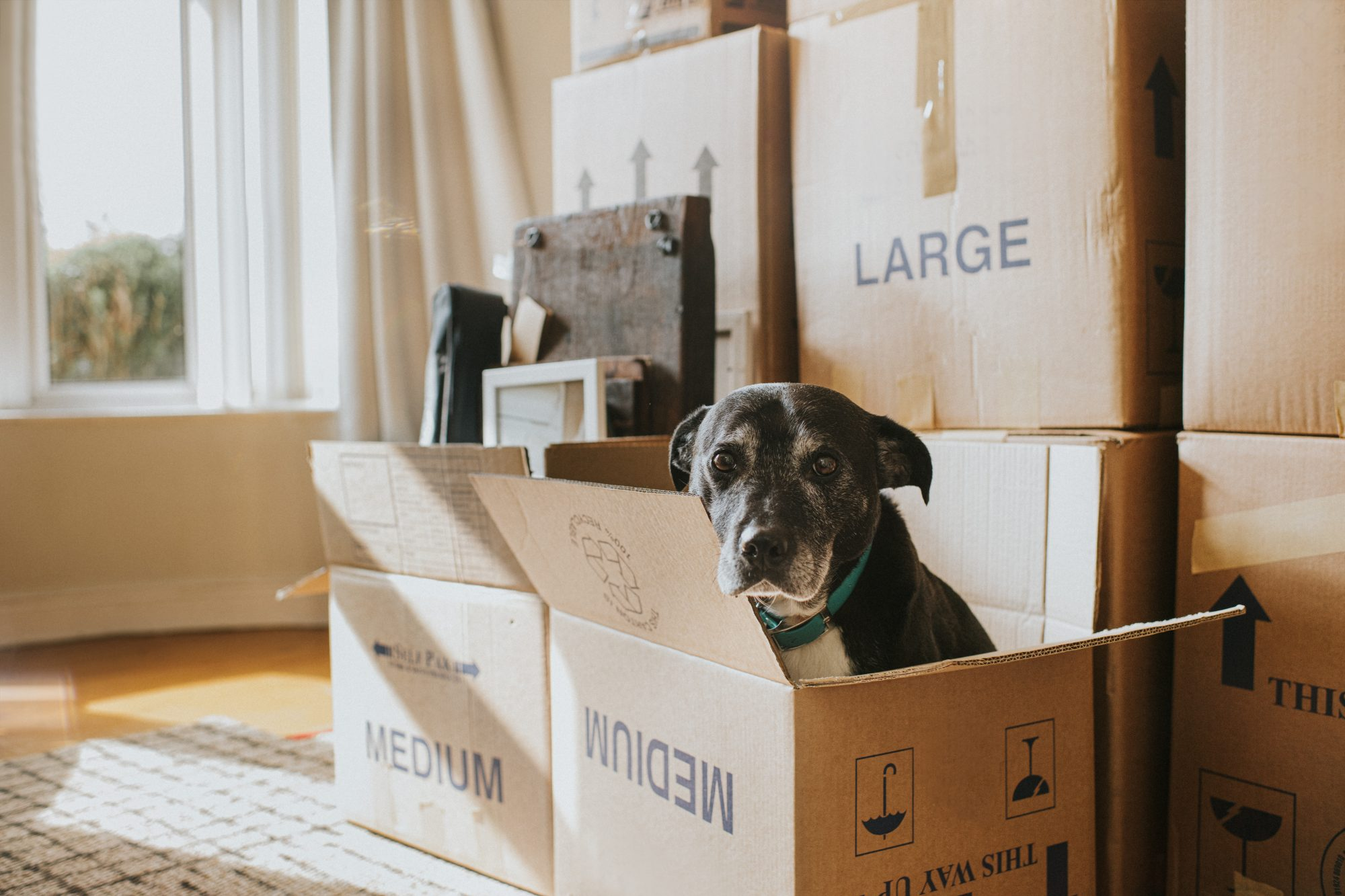 A Dog in a Cardboard Box on Moving Day