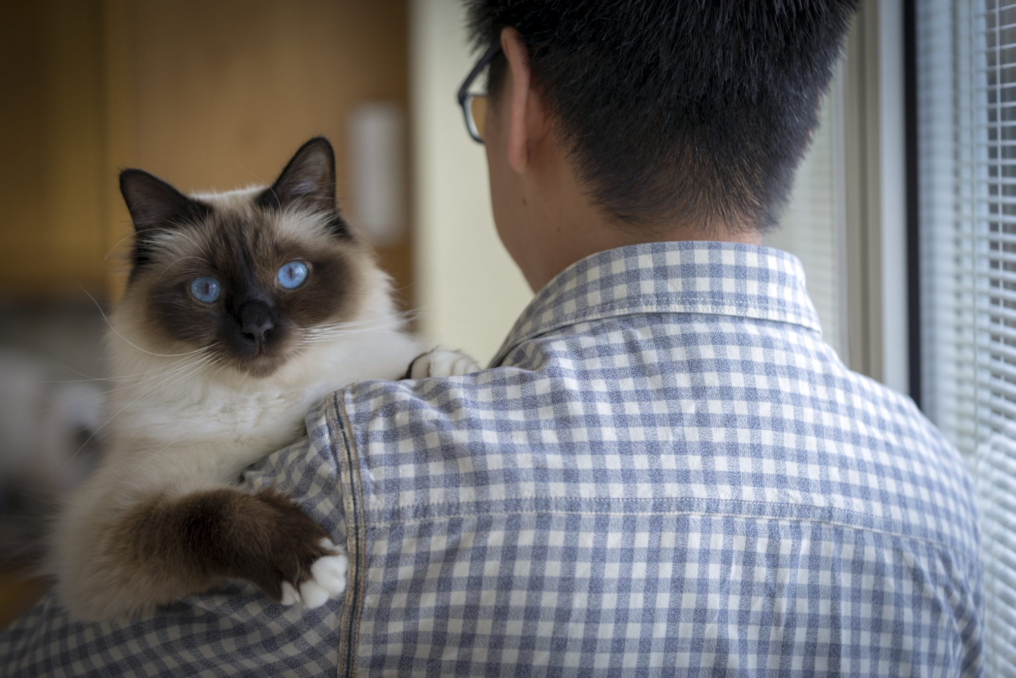 Man Holding Birman Cat
