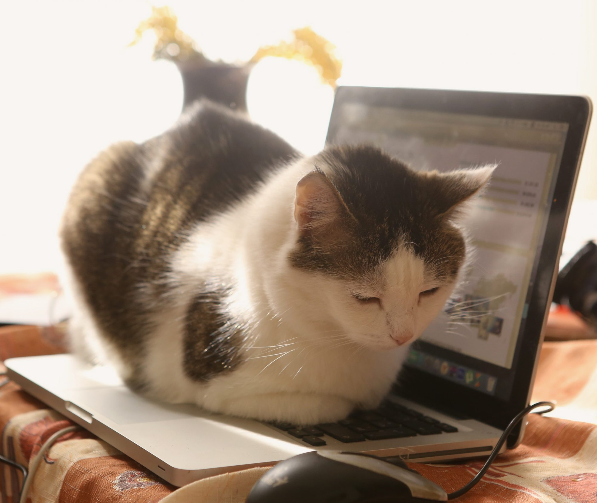 Cat on Computer Keyboard