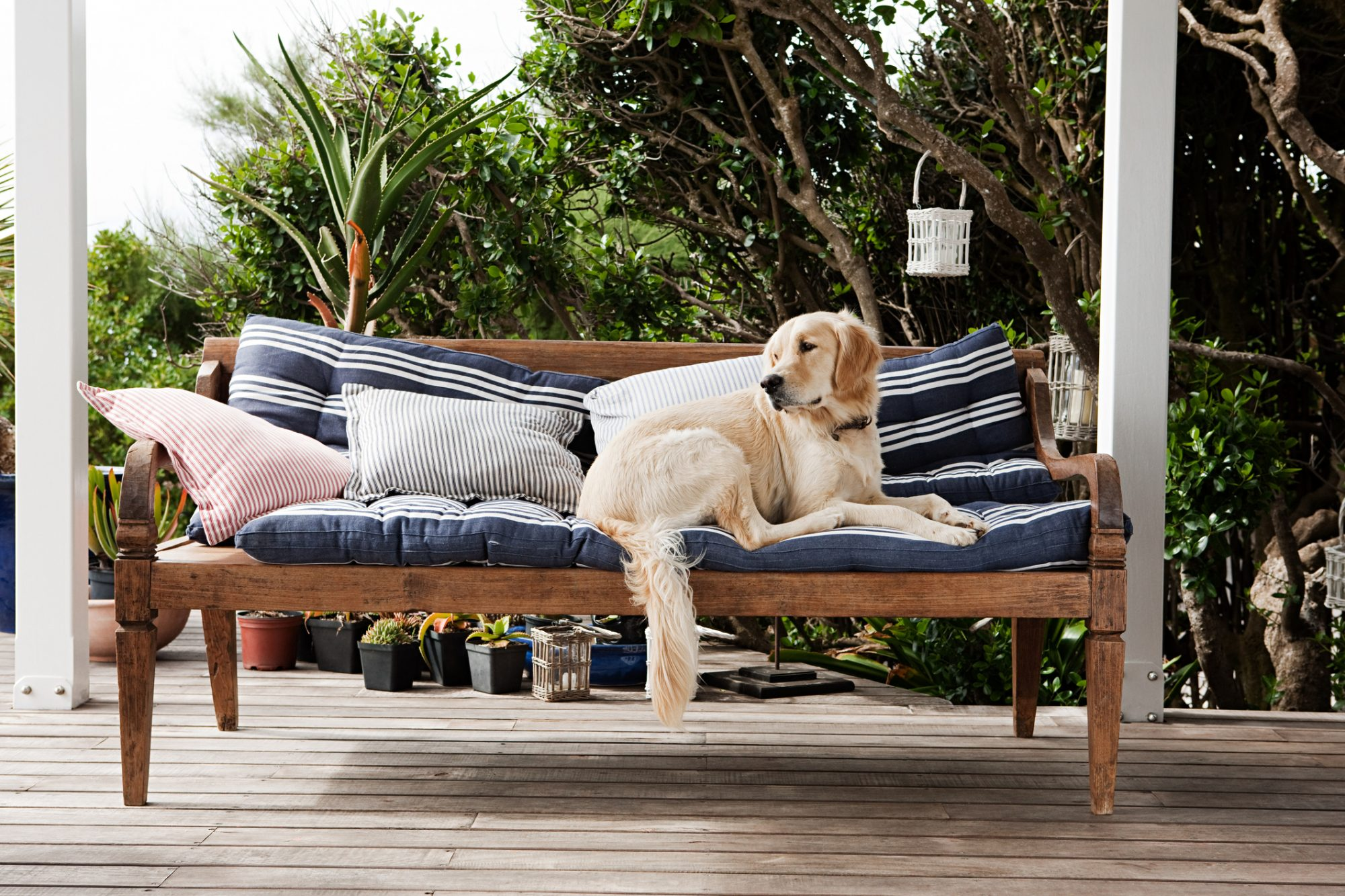 Outdoor Cushions with Dog