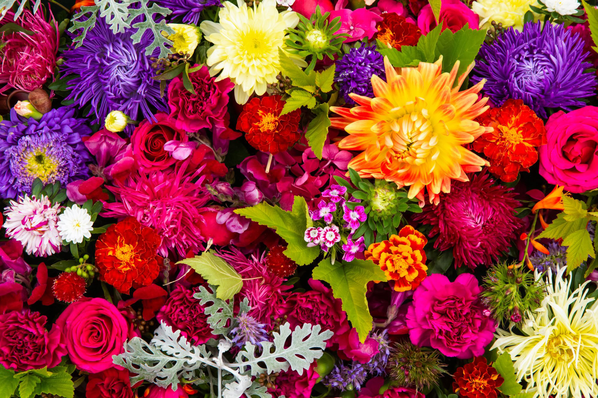 Colorful Flower Grouping