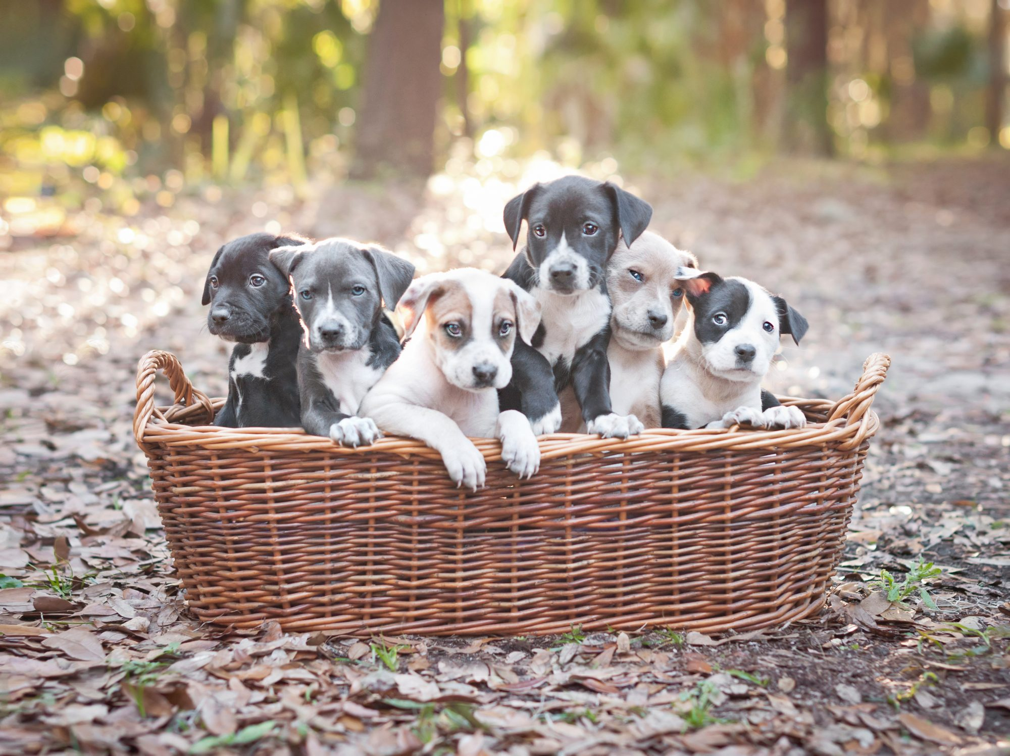 See Which Dog Breeds Are Most Popular in Your State