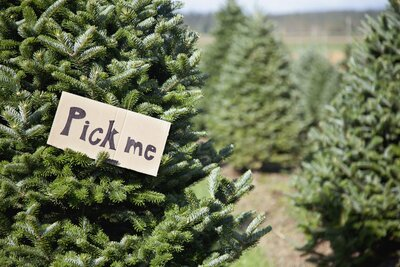 12 Types Of Christmas Trees To Know Before Heading To The Farm