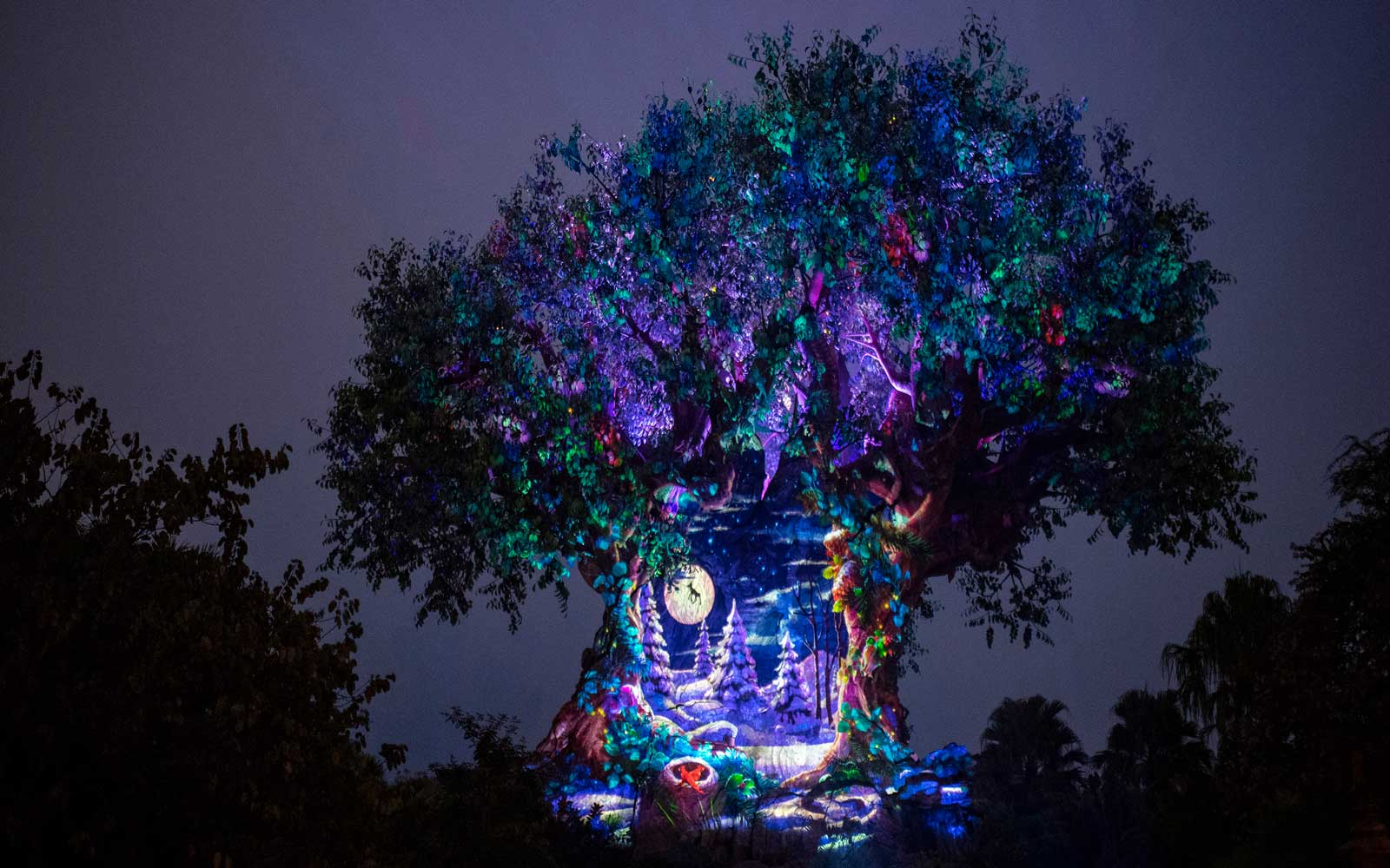 Walt Disney World's Animal Kingdom during the holidays