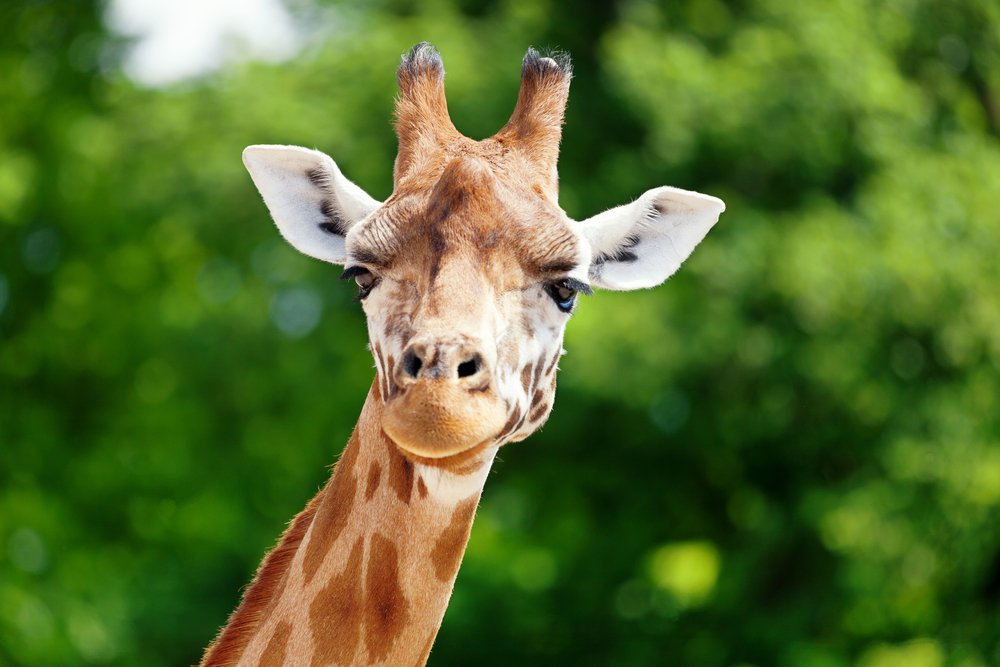 The internet cannot figure out if there's a giraffe in this video, so you tell us