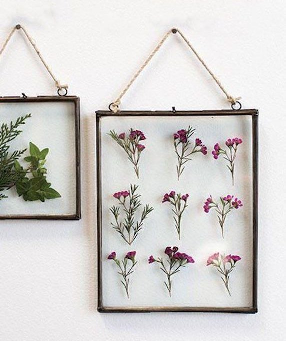Plant Trend That's Taking Over Pinterest—And It's Impossible to Get Wrong