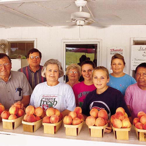 The Best Peaches in South Carolina (promo image)