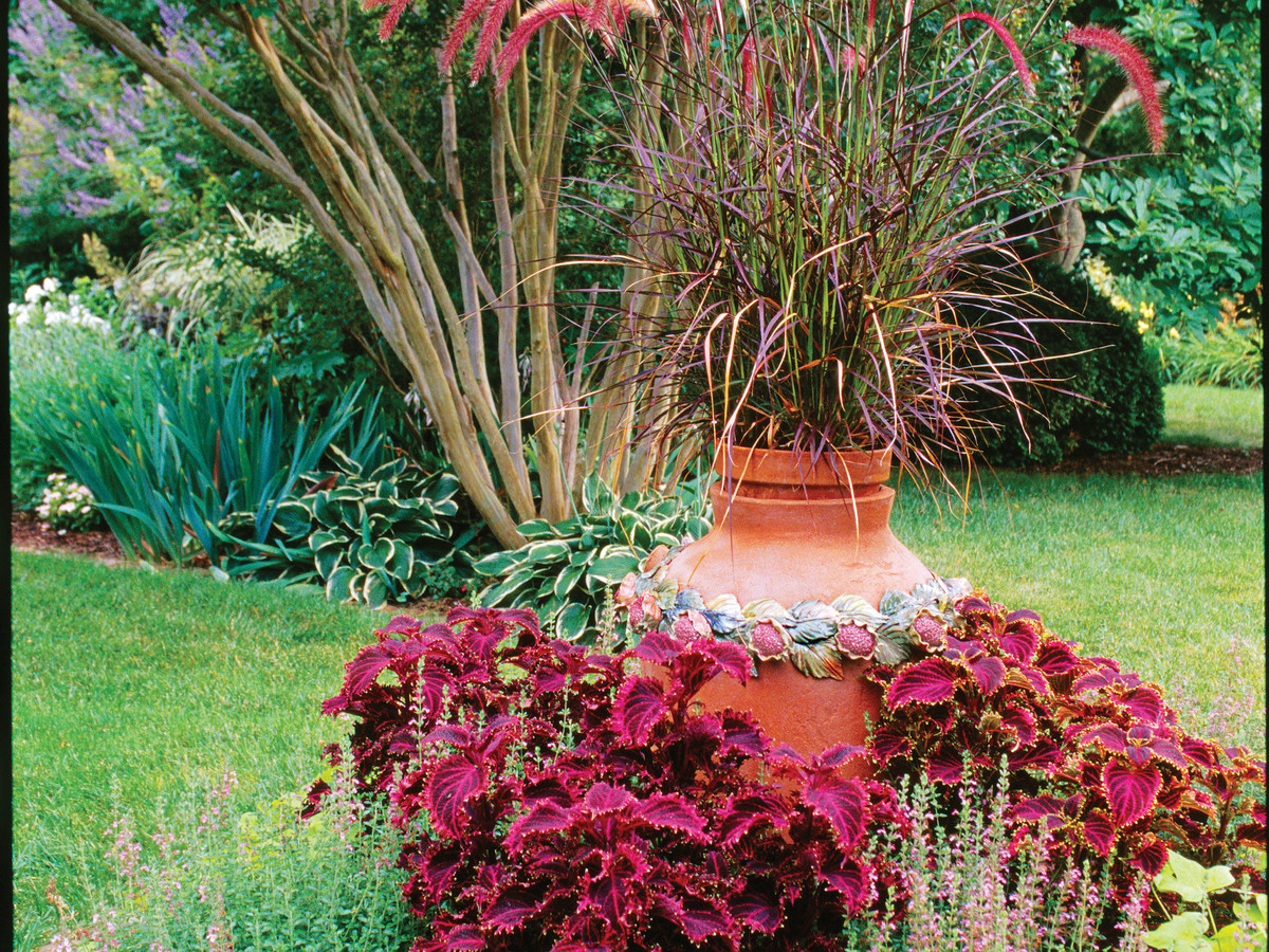 Fountain Grass Pennisetum Southern Living Southern Living
