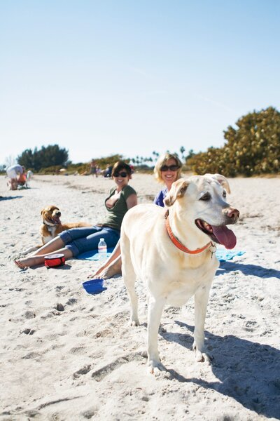 The South's Best Dog Parks - Southern Living