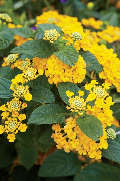 6 Heat Tolerant Plants You Need In Your Southern Garden Southern