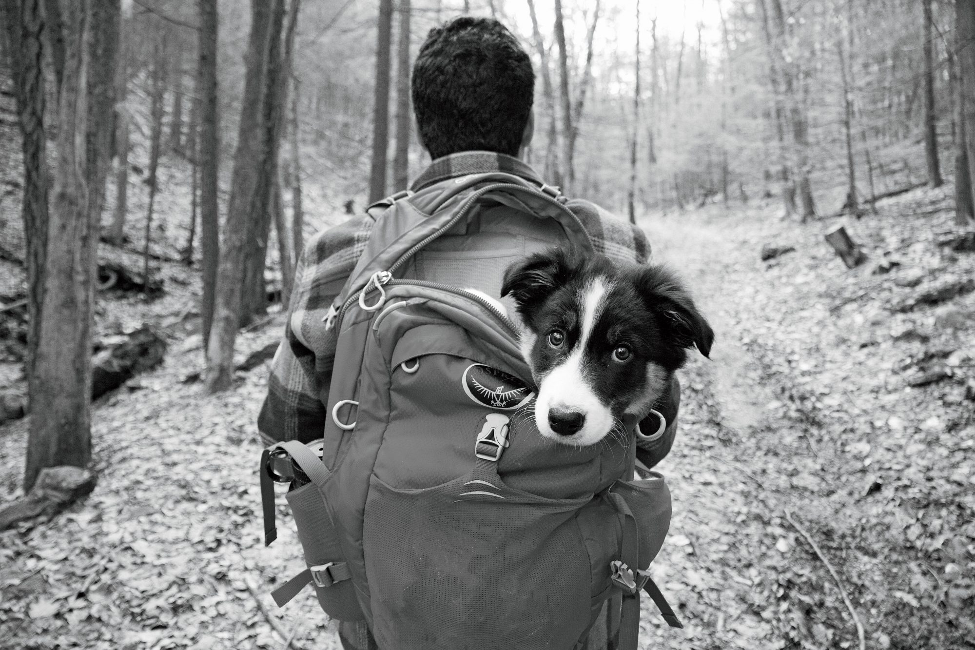 Hiking with Dog in Backpack