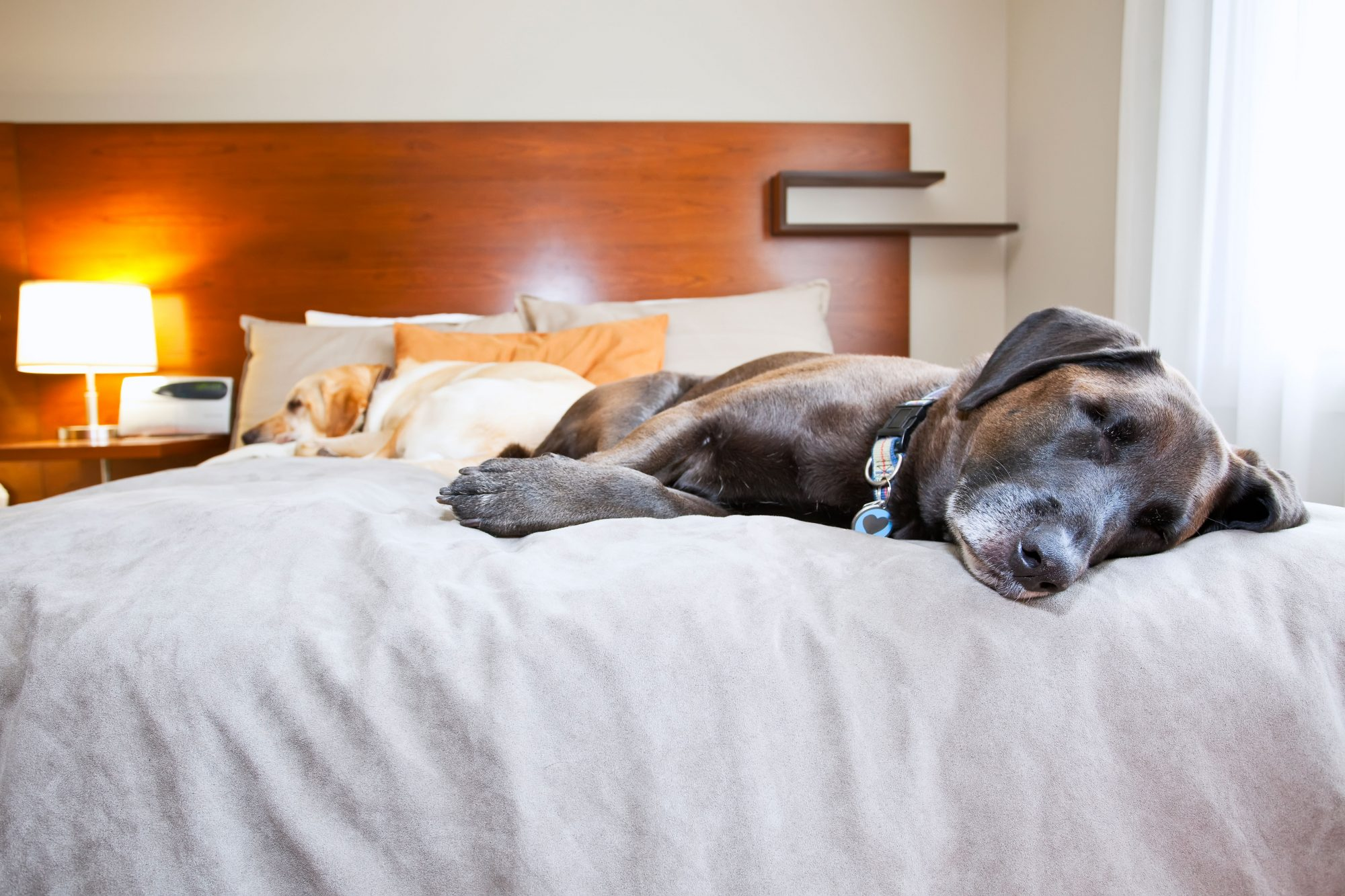 Dogs Sleeping on Hotel Bed