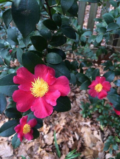 Control These Camellia Pests Naturally - Southern Living