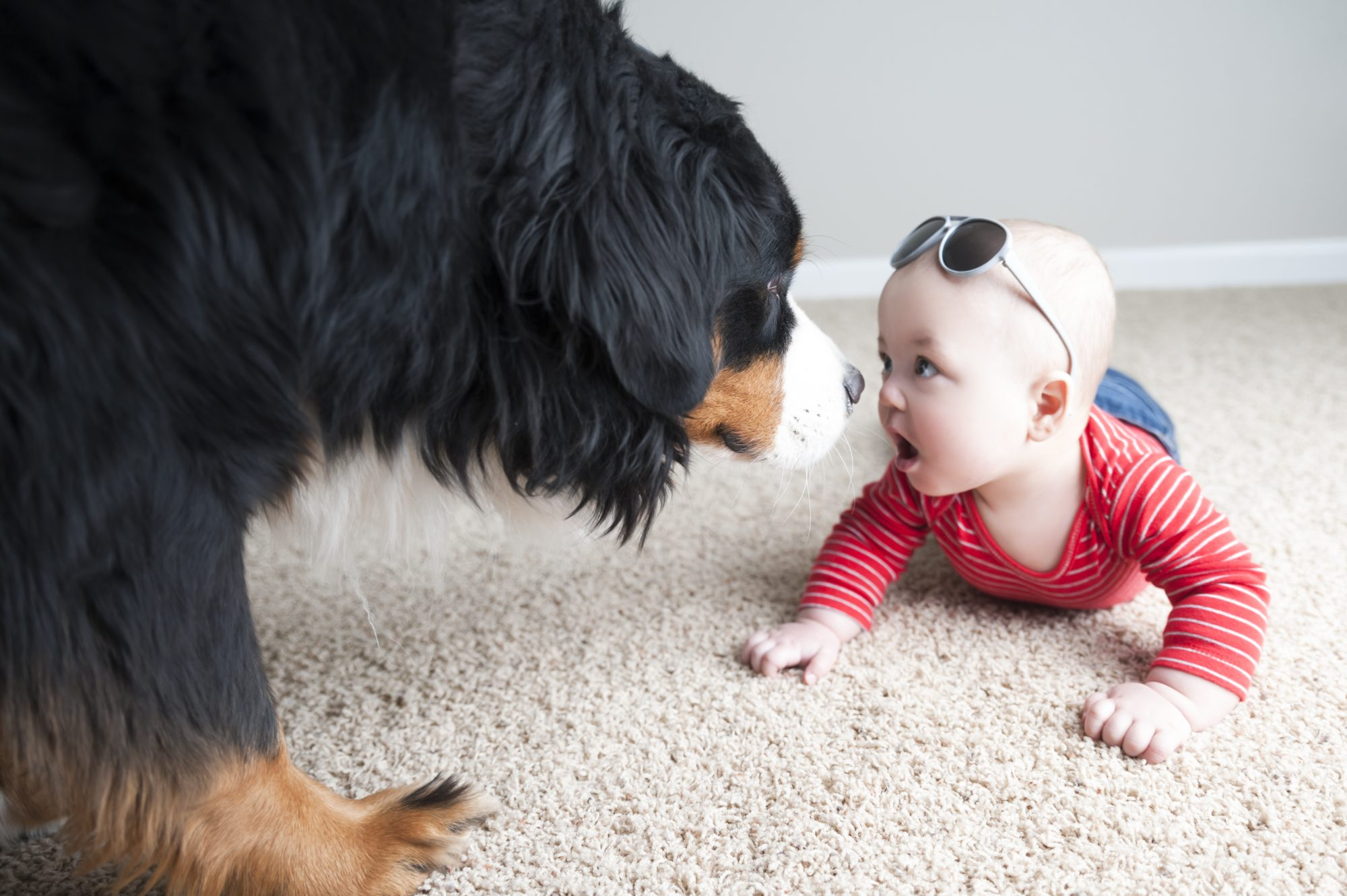 Dog Sniffing Baby