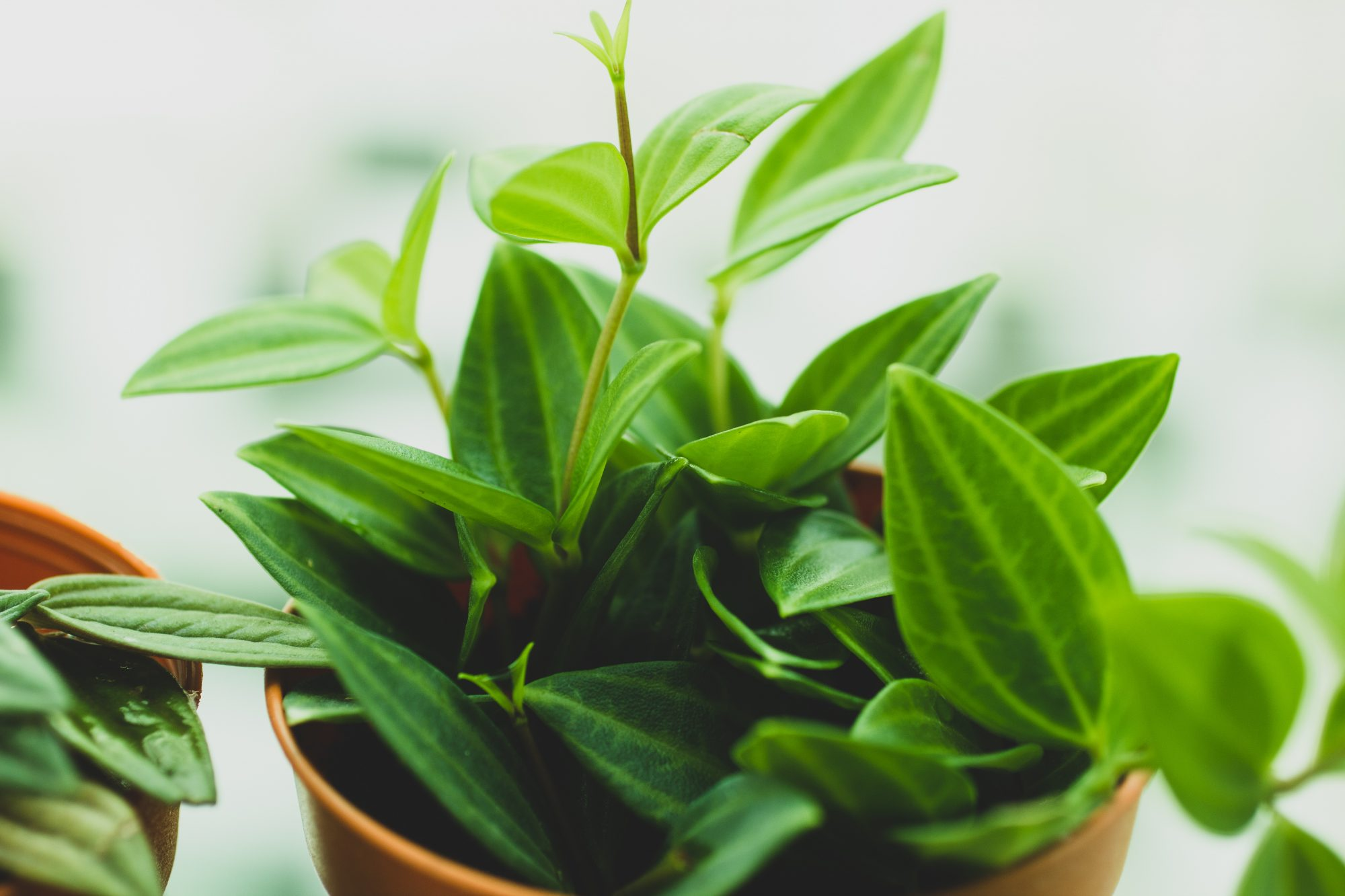 Indoor Gardening - House Plants Guide - Southern Living ... on plant identification and names, food and names, vegetables and names, greenhouse and names, animals and names, ornamental grasses and names, herbs and names, beans and names, flowers and names, roses and names, cactus and names, pets and names, types of orchids and names, weeds and names, tools and names, wildflowers and names, seeds and names, daylilies and names, clothing and names, furniture and names,