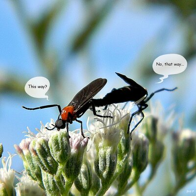 Attack of the Love Bugs - Southern Living