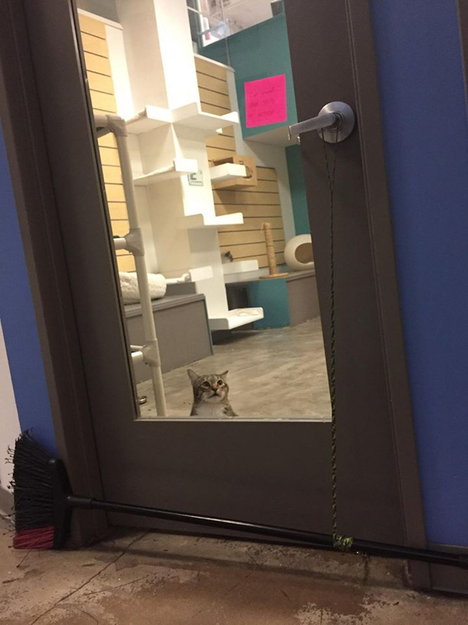 Quilty the escaping cat