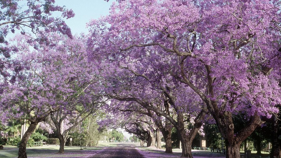 9ce8e5b00006c9 Flowering Southern Trees You Need to Plant Now