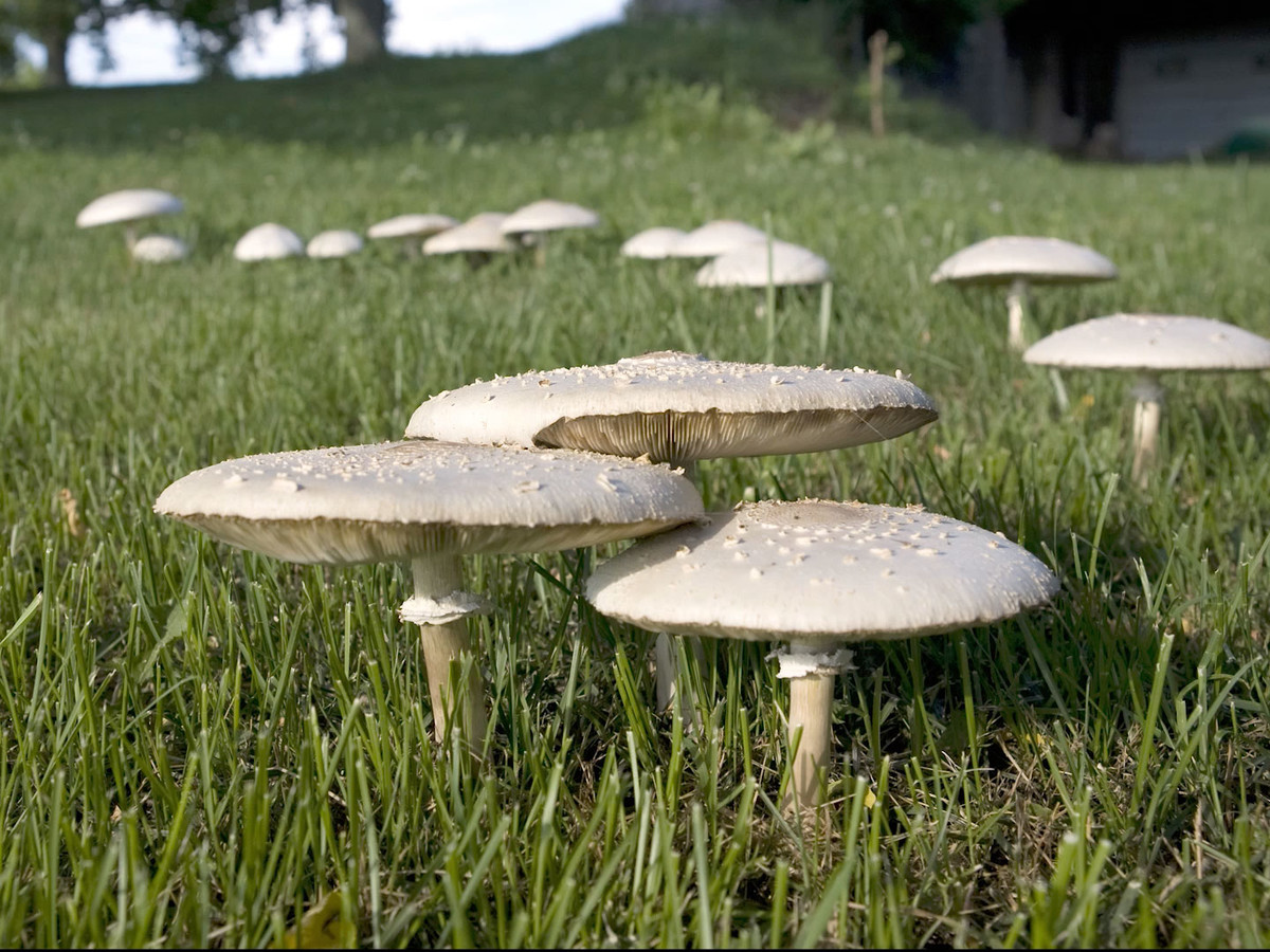 Grumpy Yard Mushrooms Getty