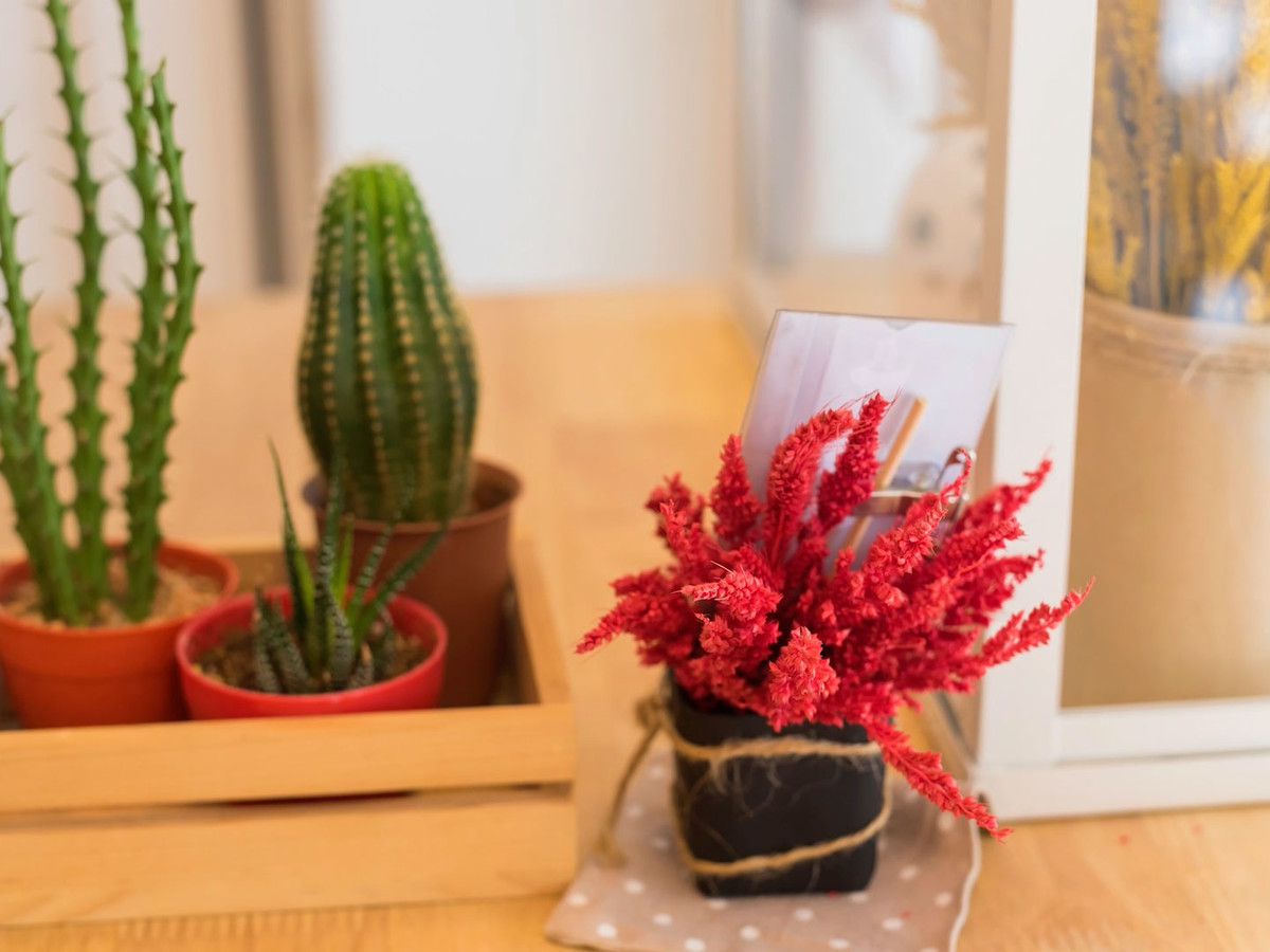 Grumpy Plants For College Students Getty Cactus