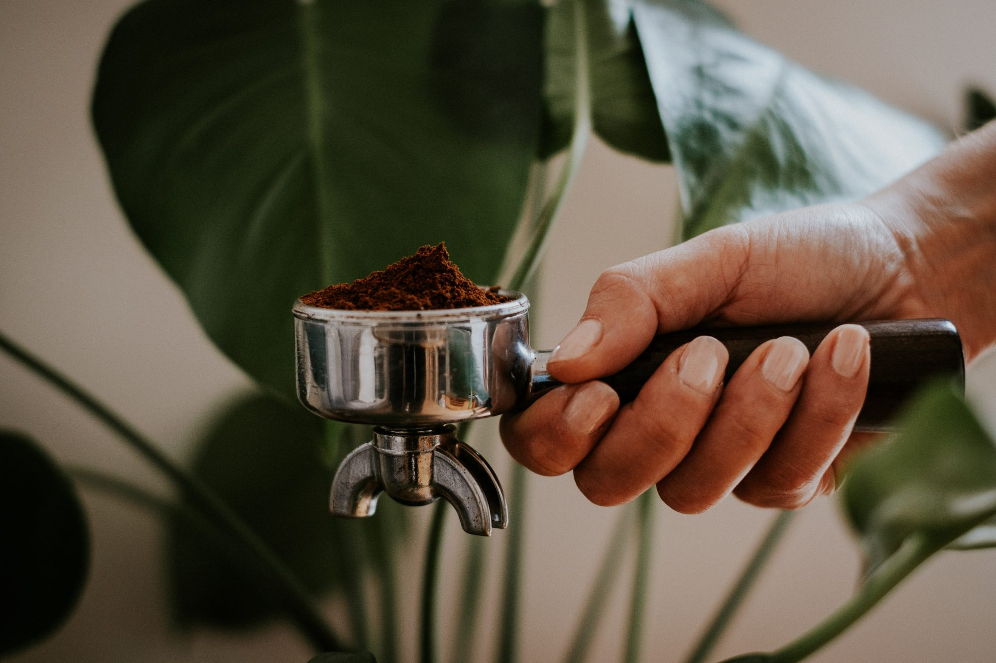 Coffee Grounds for Plants