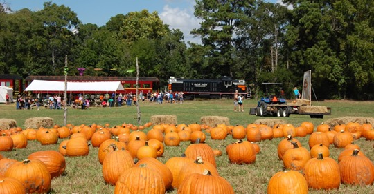 Texas State Railroad Pumpkin Patch 1